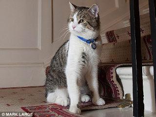 英國第一貓