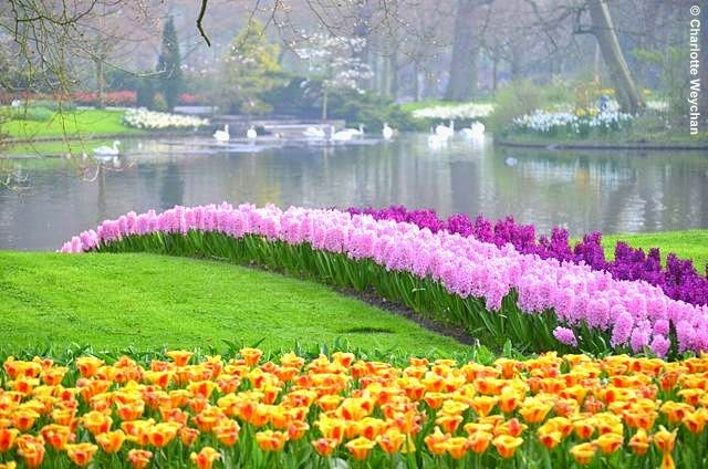 Keukenhof Is Redesigned Annually And All Bulbs Planted To Create New Floral  Displays