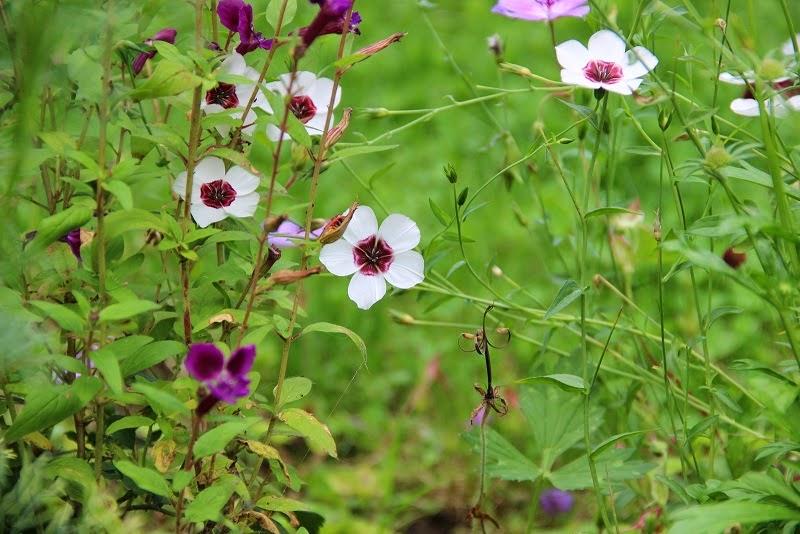 Derri re les murs de mon jardin ao t 2014 - Derriere les murs de mon jardin ...