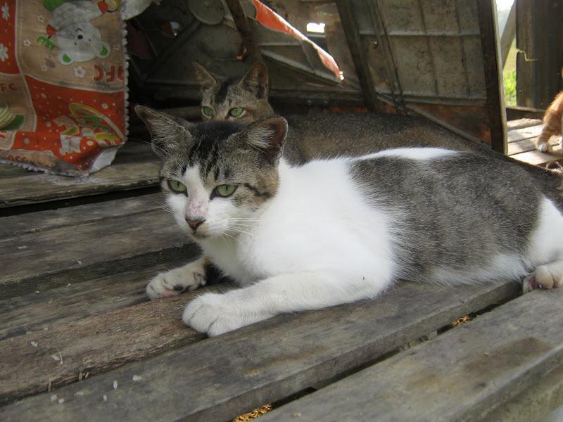 Azram Sulong Kucing