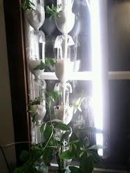 Vertical Hydroponic Window Gardens