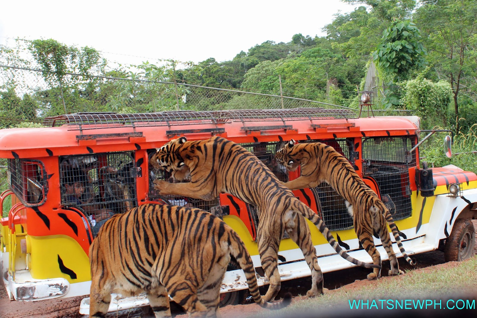 safari adventure Safari adventure, riverhead 54k likes safari adventure is the only children's entertainment center in suffolk county that combines all the activities.