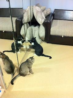 Кошачья мята, мячик и лазер: до и после.