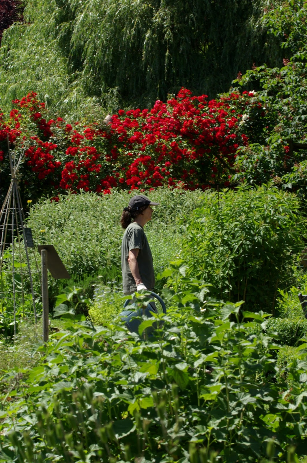Les jardins de la poterie hillen for Aux jardins