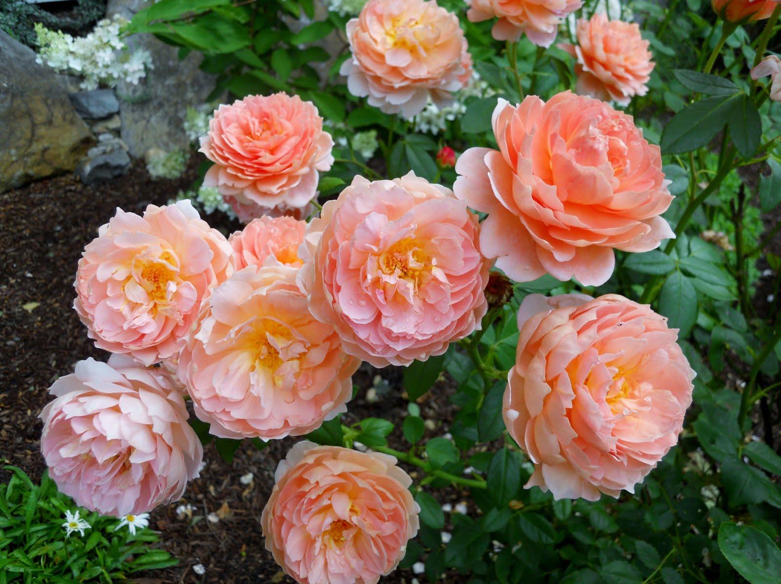flores jardim de verao:Casa de Retalhos: A beleza das flores de verão