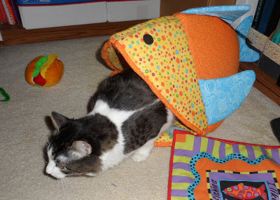 Anakin Two Legged Cat in the Funky Fish Bed