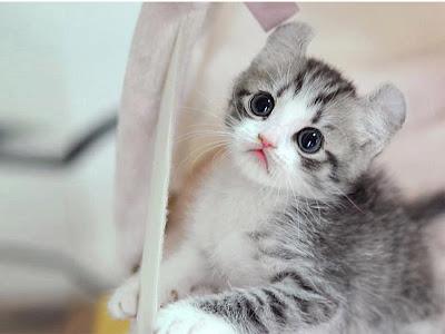 foto kucing lucu 04
