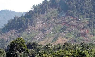 Lalu, mengapa hutan dunia menciut? kita harus mencermati penyebab
