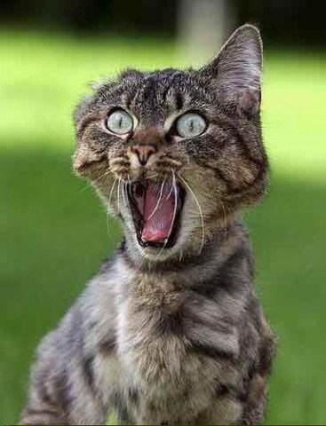 funny cat-27