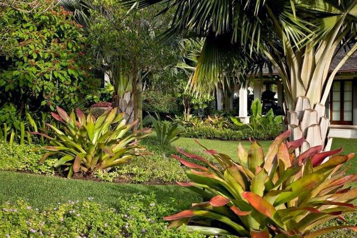 fotos jardins tropicais : fotos jardins tropicais:Jardim de Stefania: * Jardins tropicais