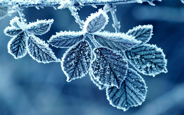 Snow Leaf HD Wallpaper, Snow HD Wallpaper, Free HD Wallpaper