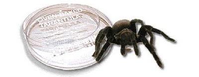 a97582_tarantula2