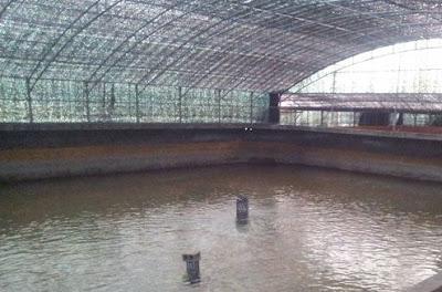 contoh kolam tertutup atap