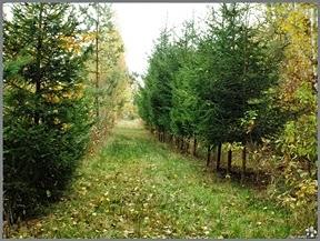 http://static.panoramio.com/photos/original/98379950.jpg