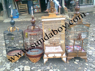 Jual Burung Pleci Garut