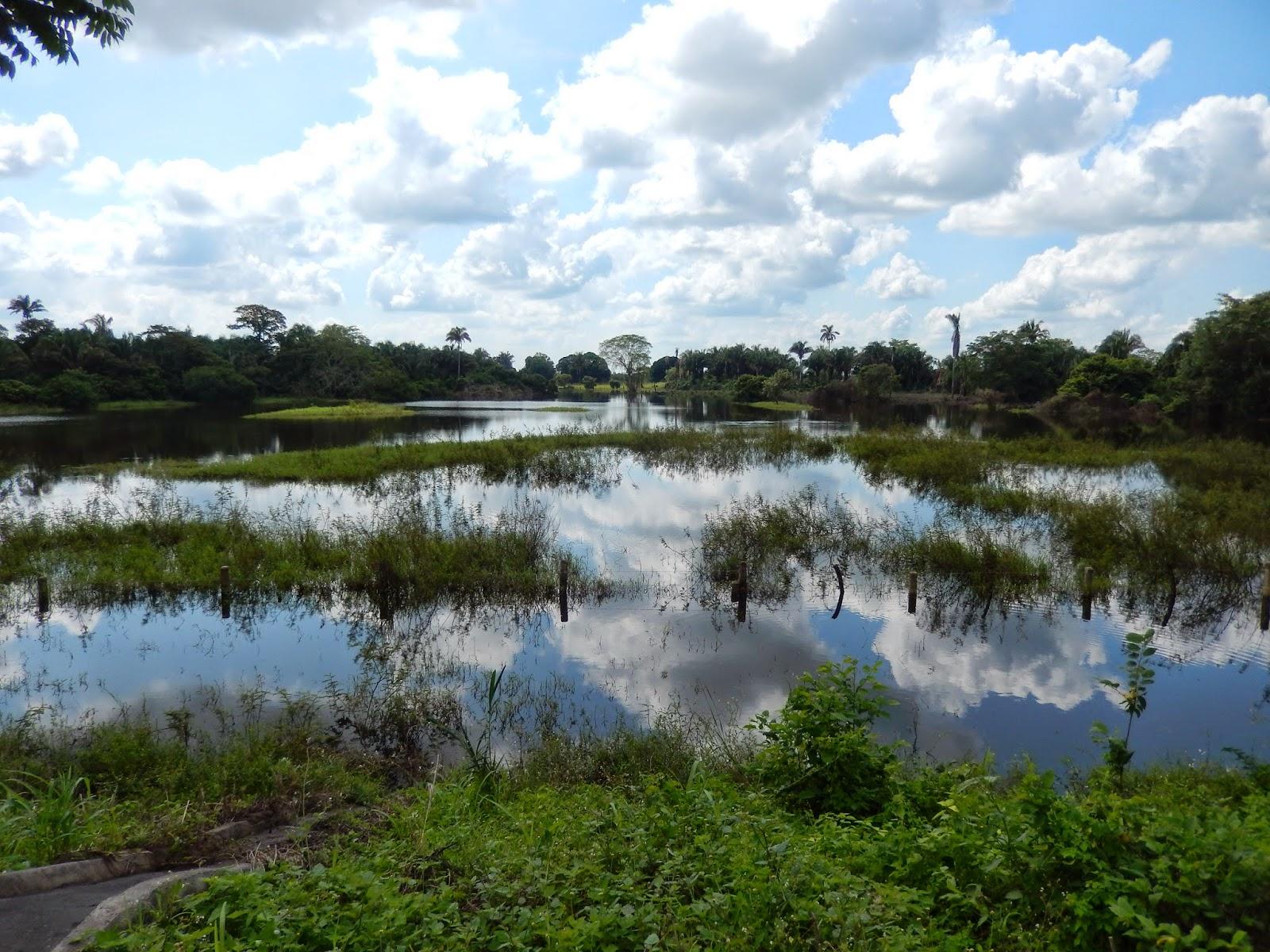 Tabasco, inundado, campos, mexico