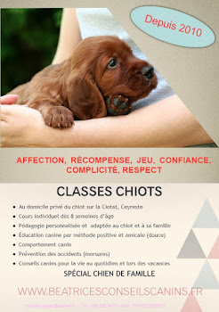 Classes chiot
