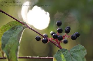 pluie goutte fruit en macrophotographie