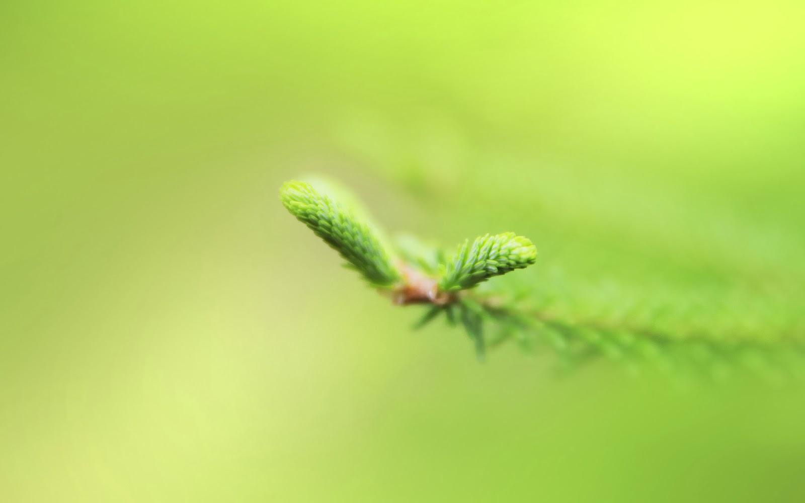 """<img src=""""http://1.bp.blogspot.com/-0JaHNXTiAGg/UvPsmsRhg-I/AAAAAAAAK_c/uW3UqcBaIiE/s1600/fresh-green-wallpaper.jpg"""" alt=""""fresh green wallpaper"""" />"""
