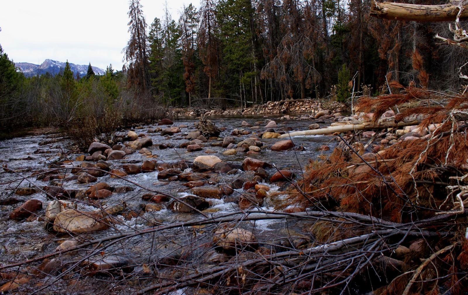 River tales rock creek utah for Rock creek fishing