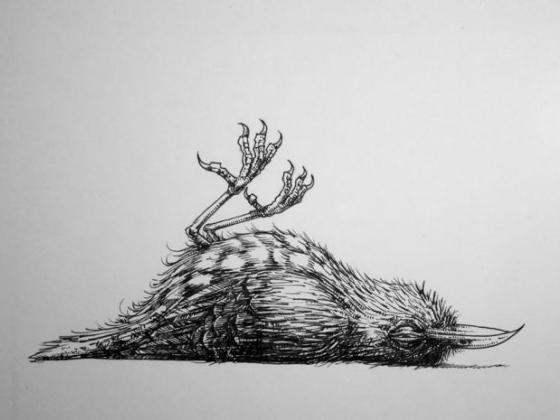 Tegning af død fugl