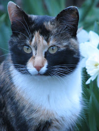this was My Lovely Cat