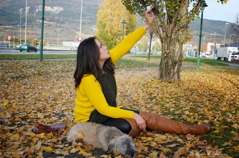 perrito blogger, perro blogger