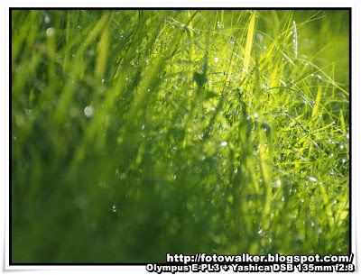 公園的小草