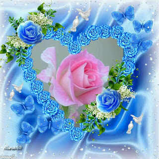 Amazing Rose Wallpapers Collections