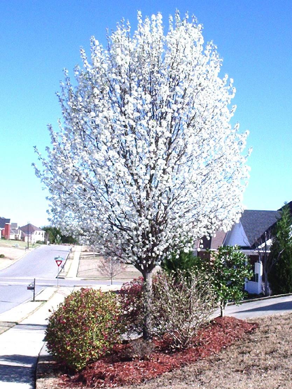 Dr Dans Garden Tips Spring Bloomers