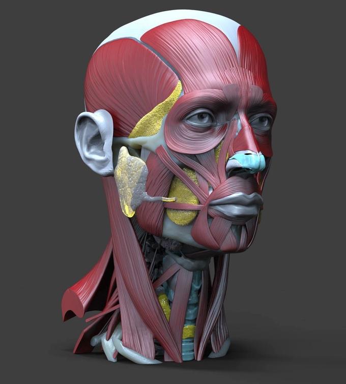 Augmented Reality: Revolutionary 3D Head & Neck Anatomy Book ...