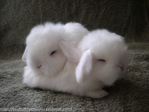 Two white bunnies.