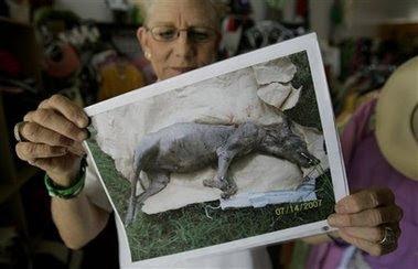 El Chupacabra Mystery, bloodsucking Dogs Image 2