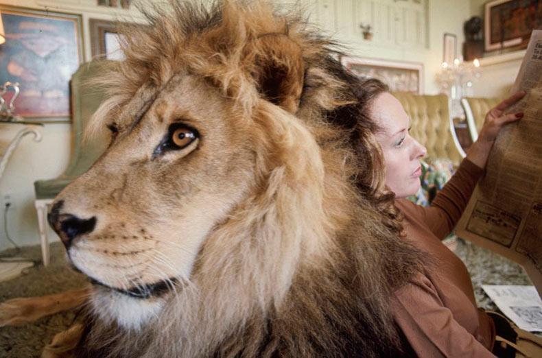 Esta familia vivió con un león de verdad en 1971
