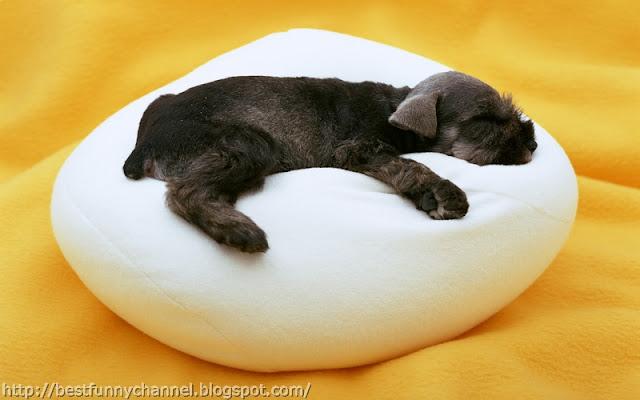 Funny black puppy.