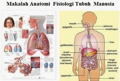 Makalah Anatomi  Fisiologi Tubuh  Manusia