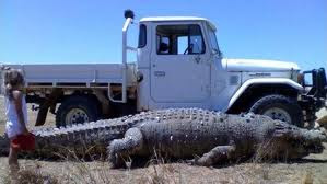 22ft monster sea crocodile