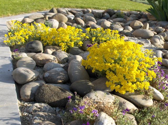 arte y jardiner a plantas de rocalla