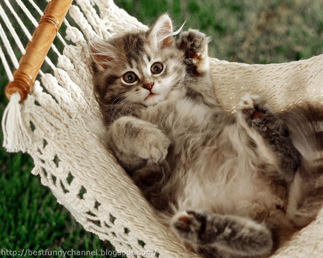 Funny kitten paying.