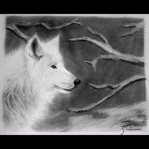 Da foto a ritratto lupo sulla neve for Lupo disegno a matita
