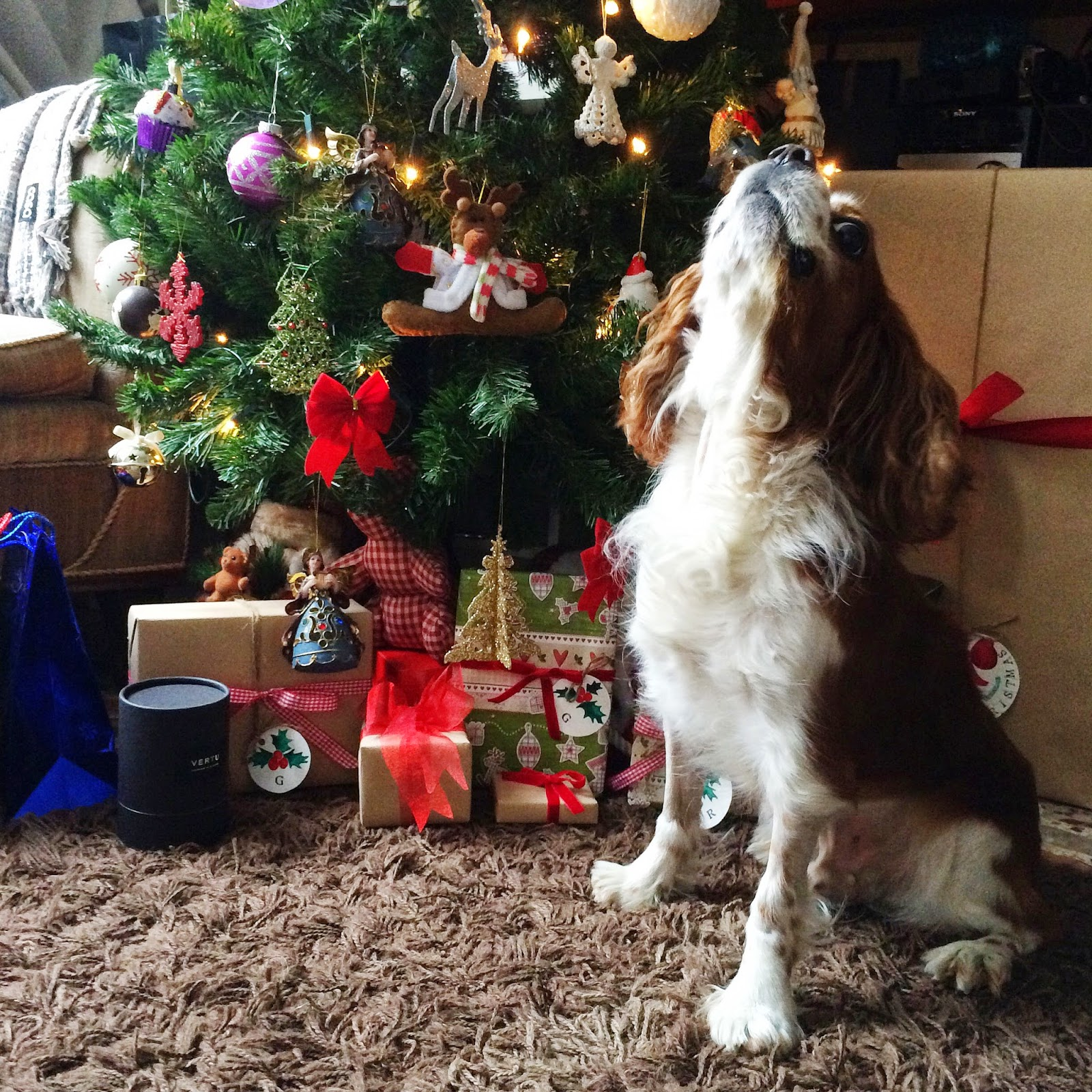 christmas mood and cavalier king misha