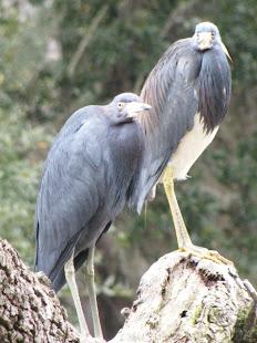 Heron Haven!