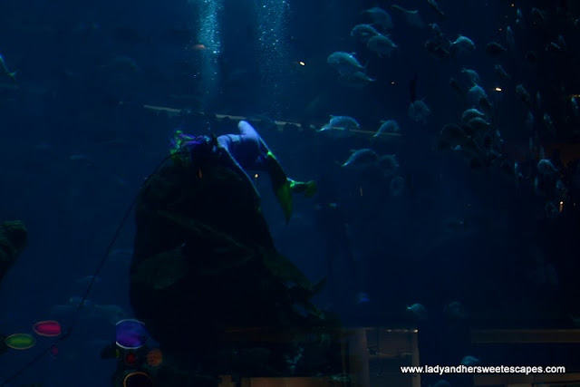 The Mermaid and the sea creatures at The Dubai Mall