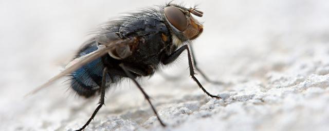 Vụ Con ruồi của Tân Hiệp Phát và