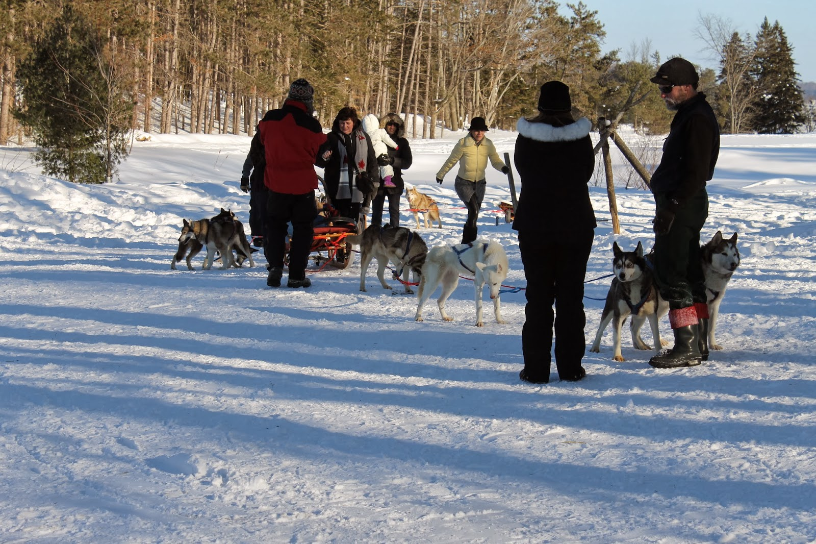 winterdance dogsledding