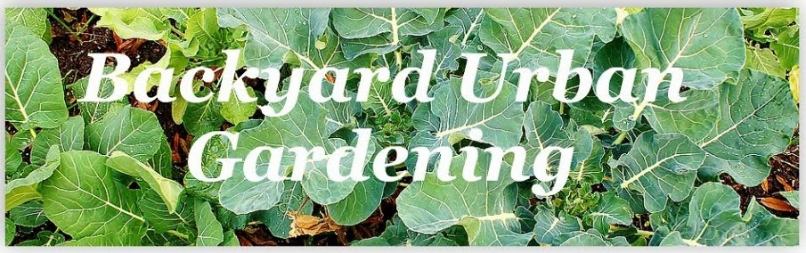 Backyard Urban Gardening - Grow Your Own Food