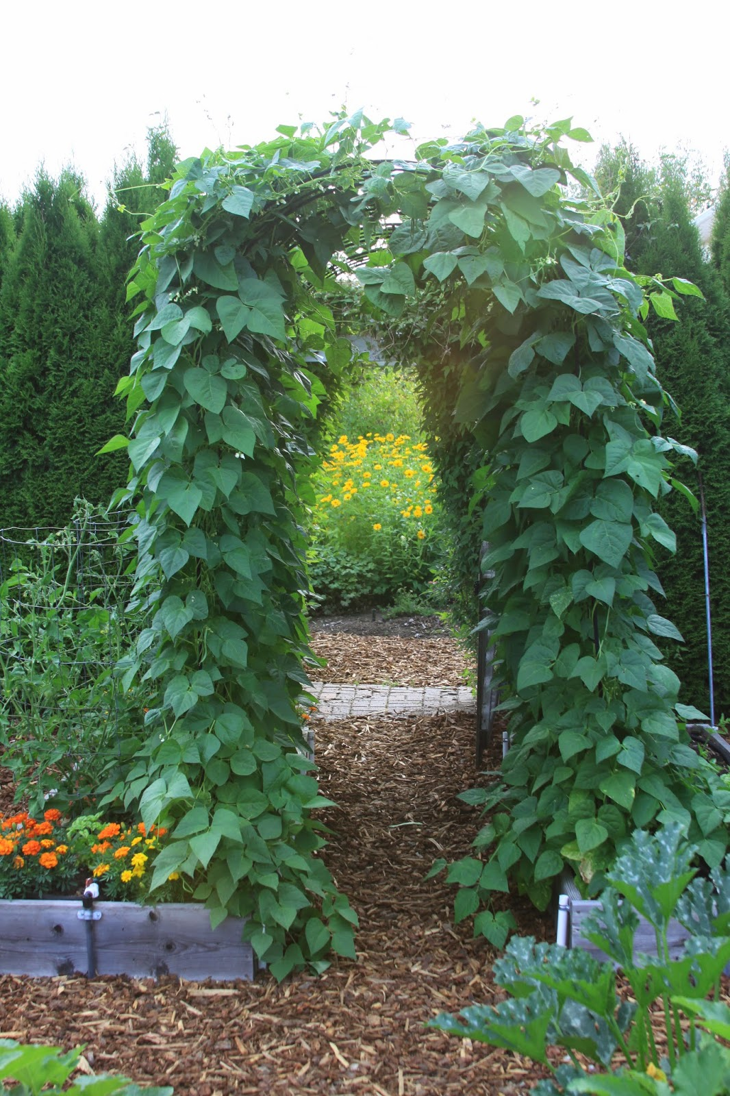 Pole Bean Trellis Ideas Part - 34: Pole Bean Trellis