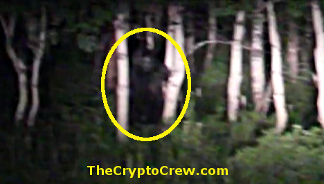 was Bigfoot spotted in Utah?