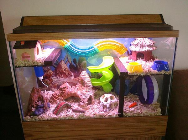 hamster aquarium