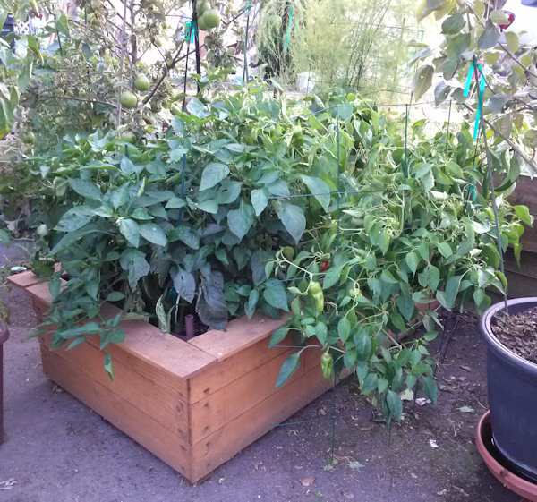 Sub Irrigation Planters (SIPs) Are Portable, Self Watering Containers That  Can Be Built In Any Number Of Sizes To Accommodate Different Vegetable Types  And ...